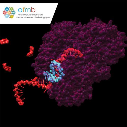 Architecture et Fonction des Macromolécules Biologiques (AFMB) laboratory